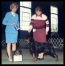 Tory at the Progressive Dog Club of Wayne County taking BOW for major points and becoming a new AKC Champion on April 27, 2003, handled by Pat Turner, under Judge Mrs. Patti Widick Neale