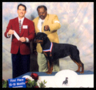 Tory at the 2002 SRCGT specialty taking 1st place 15-18 month sweepstakes in Feb. 2002, handled by breeder-owner Woodrow Worthy, under Breeder-Judge Mr. Perry Pason