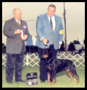 Tory at the Holland Michigan K.C. as a special taking BOS on May 23, 2003, handled by Mr. Rodger Freeman