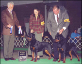 """Maddie"" & her brother ""Vinnie"" both taking RWB at the Hoosier KC '06"
