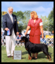 "Ch. Von Baker's Too Hot To Hold, CGC, CKC ptd., Multi-Best of Opposite Sex Winner & Rottweiler Specialty Placer - ""Turner"""
