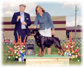 """Ch. Von Baker's Too Hot To Hold, CGC, Can ptd., Multi-BOS Winner - """"Turner"""""""