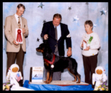 Turner at 2001 MRC specialty taking a 2nd place from the Am-Bred class, handled by Mr. Rodger Freeman