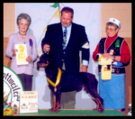 Turner at the 2000 MRC specialty taking a 3rd place from the 9-12 month puppy class, handled by Mr. Rodger Freeman, under Breeder-Judge Mrs. Michelle Billings