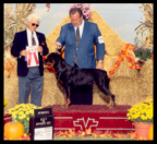 Turner at the Monroe K.C. taking BOS & WB for a 3 point major on September 29th, 2002, handled by Mr. Rodger Freeman, under Judge Mr. Thomas R. Squicciarini