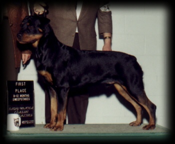 Judge winning 1st place from 9-12mos puppy dog sweepstakes at the 1st Hoosier Rottweiler Spec. 97'