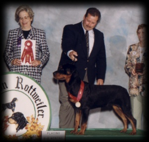 Judge winning 2nd place 6-9mos puppy dogs at the MRC 96'