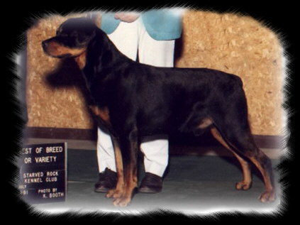 Rocky winning Best of Breed at the Starved Rock KC in July 1991