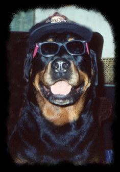 Rocky - Mr. Cool